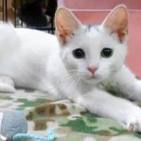 Adopt A Pet :: Jojo - Oskaloosa, IA