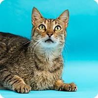 Adopt A Pet :: Mr. R - Houston, TX