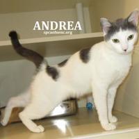 Adopt A Pet :: Andrea - Elizabeth City, NC