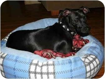 Dachshund/Chihuahua Mix Dog for adoption in Tahlequah, Oklahoma - Paws