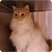 Adopt A Pet :: Somber - Greenville, SC
