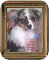 Anatolian Shepherd Mix Puppy for adoption in Carrollton, Texas - Zekk