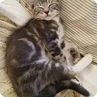 Adopt A Pet :: Emoji - Ocala, FL