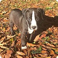 Adopt A Pet :: WATSON - CHAMPAIGN, IL