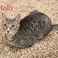 Adopt A Pet :: Molly - Baltimore, MD