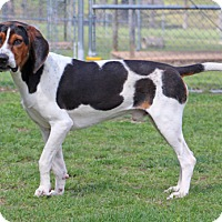 Adopt A Pet :: Drake - Savannah, TN