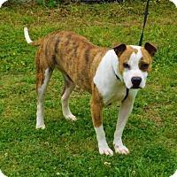 Adopt A Pet :: Dasha-021501k - Tupelo, MS