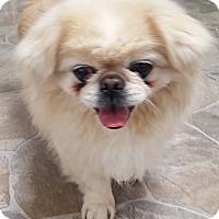 Adopt A Pet :: Jack (White) - Fennville, MI