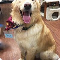 Adopt A Pet :: T4 Grey - BIRMINGHAM, AL