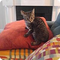 Adopt A Pet :: Gamora - Columbus, OH