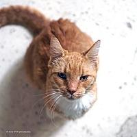 Adopt A Pet :: Camelot - Tucson, AZ