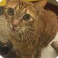 Adopt A Pet :: Oz 7972 - Columbus, GA