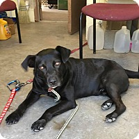 Adopt A Pet :: TOBIAS - Cadiz, OH