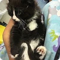Adopt A Pet :: LeFou - Richboro, PA