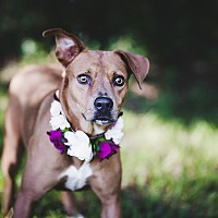 Adopt A Pet :: Annabelle - Fort Valley, GA