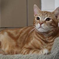 Adopt A Pet :: Tucker - Brunswick, ME
