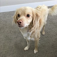 Adopt A Pet :: Evan - Culver City, CA