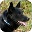 Photo 3 - Australian Shepherd Mix Dog for adoption in Westfield, New York - Sasha