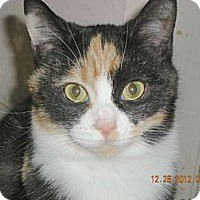 Adopt A Pet :: Fiona - Hood River, OR