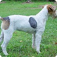 Adopt A Pet :: SENECA - Scottsdale, AZ