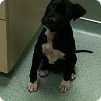 Adopt A Pet :: *Steve - Winder, GA