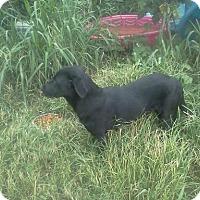 Adopt A Pet :: Mona - Albany, NY