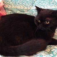 Adopt A Pet :: Lois - Beverly Hills, CA