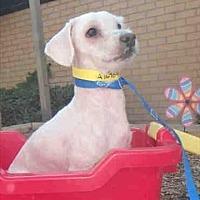 Adopt A Pet :: Nestle - Encino, CA