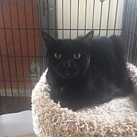 Adopt A Pet :: Yaeger - Alpharetta, GA