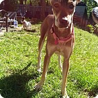 Adopt A Pet :: COLA - Toronto/GTA, ON