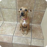 Adopt A Pet :: Pipin *Petsmart GB* - Appleton, WI