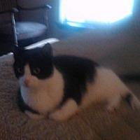 Adopt A Pet :: TX - Skywalker (MCR) - Gainsville, GA