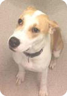 Retriever (Unknown Type) Mix Dog for adoption in Columbus, Georgia - Ann Marie Jr. 5490