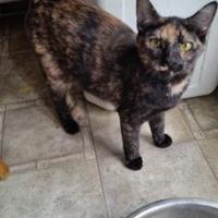 Adopt A Pet :: Angel - Newburgh, IN