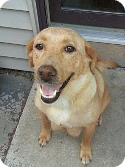 Flat-Coated Retriever/Pug Mix Dog for adoption in Oak Creek, Wisconsin - Molly