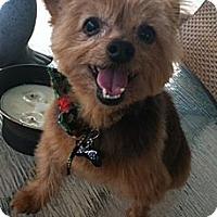 Adopt A Pet :: Yoshi - Ocala, FL