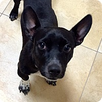 Adopt A Pet :: Hansel - Mission Viejo, CA