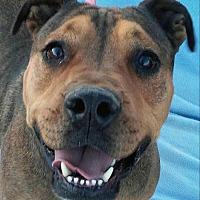 Adopt A Pet :: Ivan - Phoenix, AZ