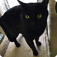 Adopt A Pet :: HIPPO! - Owenboro, KY