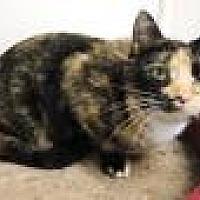 Adopt A Pet :: Suri - Stuart, VA