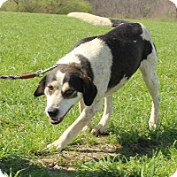 Adopt A Pet :: Chase - Macomb, IL