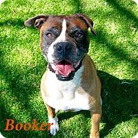 Adopt A Pet :: Booker - El Cajon, CA