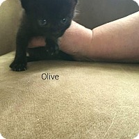 Adopt A Pet :: Olive - Wichita Falls, TX