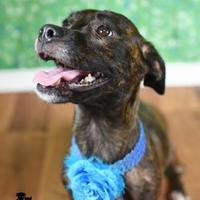 Adopt A Pet :: Trixie - Gulfport, MS