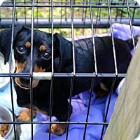 Adopt A Pet :: Finnley - Adoption pending - Poland, IN