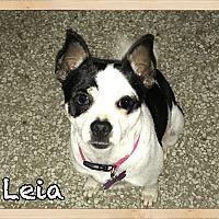 Adopt A Pet :: Leia - Orlando, FL