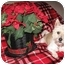 Photo 2 - Westie, West Highland White Terrier Dog for adoption in Frisco, Texas - Mikey