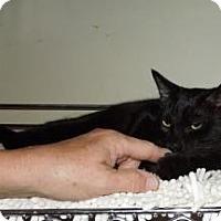 Adopt A Pet :: Hook - Mission Viejo, CA