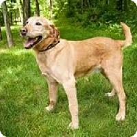 Adopt A Pet :: Cody - Lewisville, IN