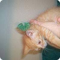 Adopt A Pet :: Rambo - Austin, TX